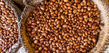 Argan Oil: Origines